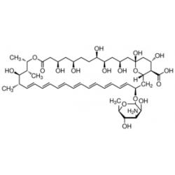 Amphotericin B from Streptomyces sp. ~80% (HPLC), powder