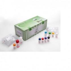 کیت پی سی ار PCR KIT PGI